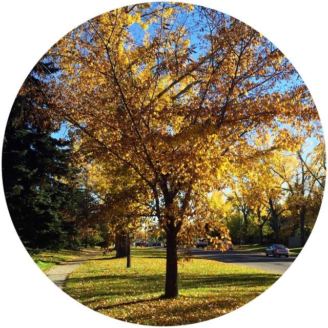 Fall - Sweetnsimpleblog